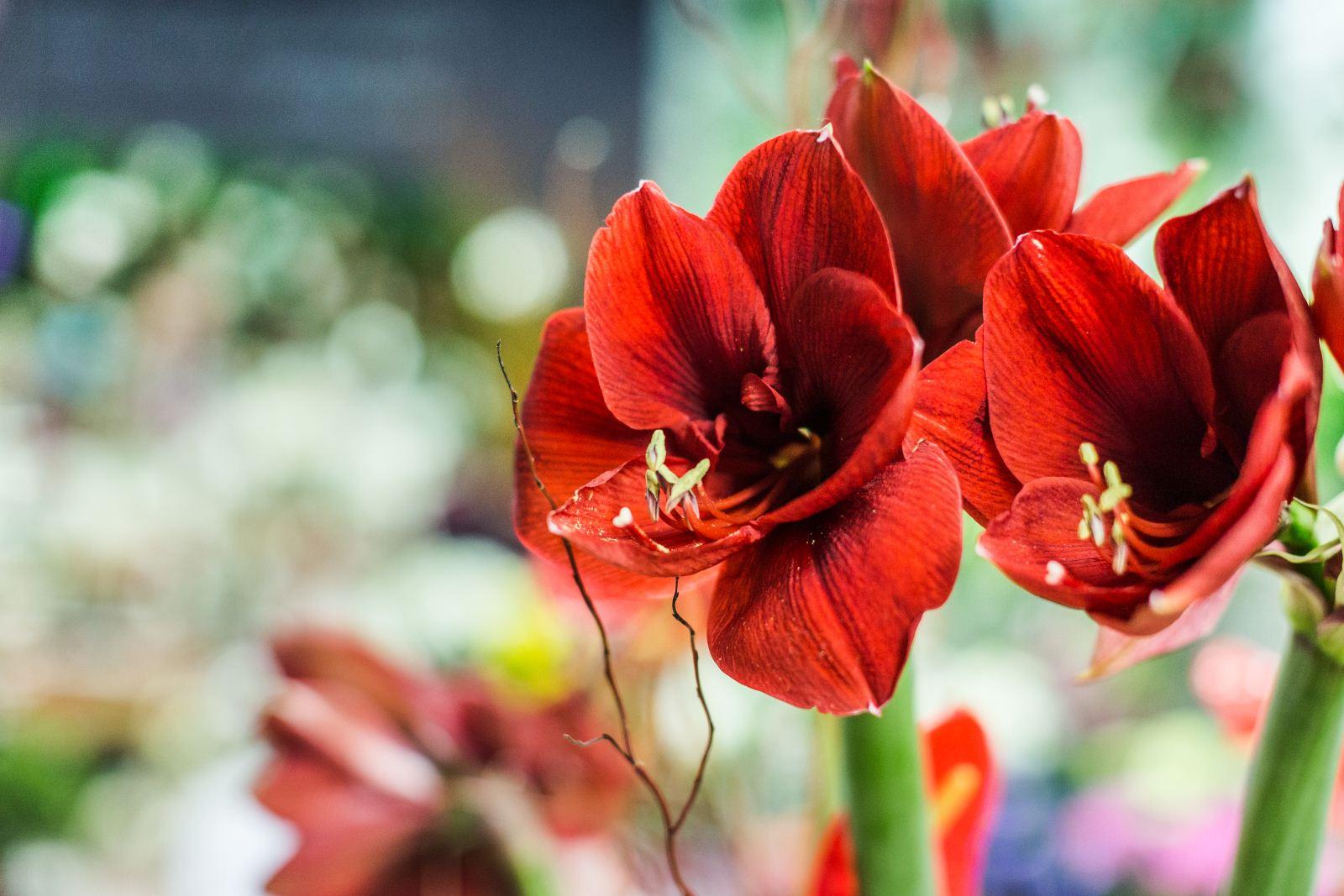 Guttridge Flowers South Wales Interflora Florist
